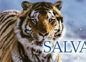Exposición: Salvajes (FINALIZADA)