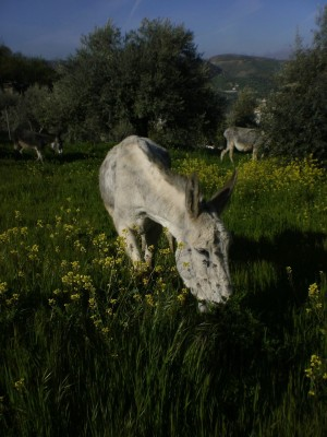 burros3
