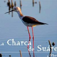 La Charca de Suárez