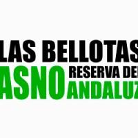 Las Bellotas. Reserva del Asno Andaluz