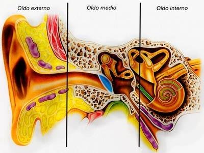 otitis1
