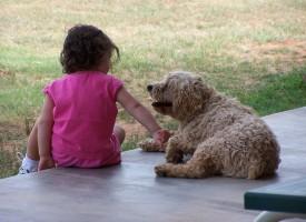 ¡Mamá, quiero una mascota!